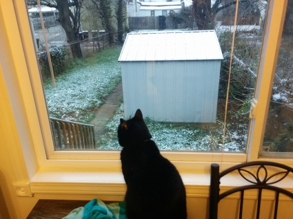 We got a dusting on snow on Thursday. Bagheera was not pleased.