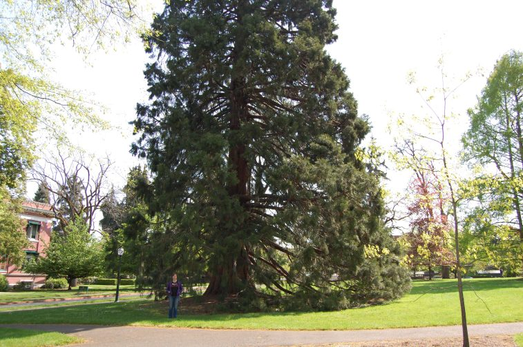 Look at the Ber, Look at the Tree. That's a big tree.