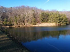 The edge of Mitchell Hill Lake.